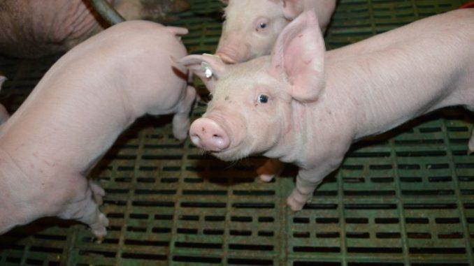 Landvolk und Tierärzte kritisieren Novelle zur Hausapothekenverordnung - Foto: Landvolk