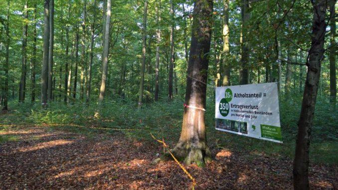 Waldbesitzer fühlen sich gegängelt - Foto: Sorgenfrei