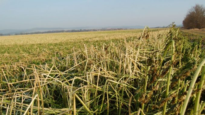 Frost kommt den Landwirten gelegen - Foto: Landvolk