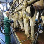Milchwirtschaft hat viele Gesichter - Foto: Landvolk
