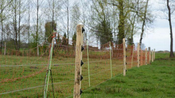 Herdenschutzzäune sind keine echte Lösung - Foto: Bettina Diercks