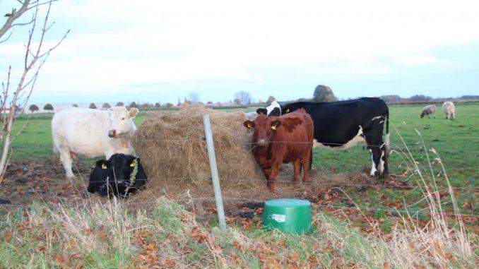 Deutsche Verbraucher kaufen mehr Rindfleisch - Foto: Landvolk