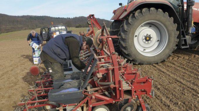 Zuckerrübenanbauer müssen nach Alternativen suchen - Foto: Landpixel