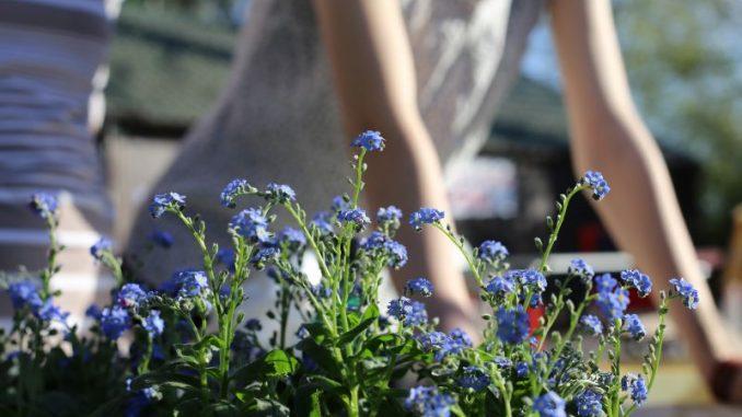 Der Garten wird naturnäher und regionaler -