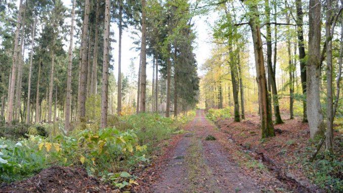 FFH-Ausweisungen treiben Waldbauern um - Foto: Landpixel