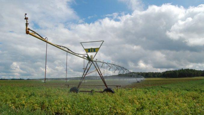 Kein Regen – Kein Korn: Trockenheit sorgt Bauern - Foto: Landvolk