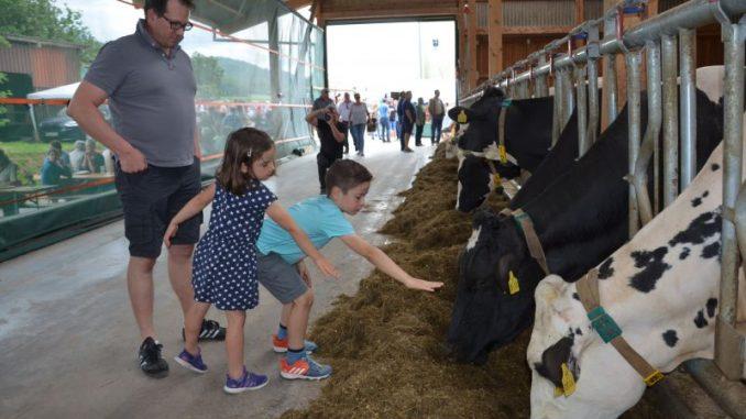Die Kuh-Dusche kühlt und erfrischt im Sommer - Landvolk