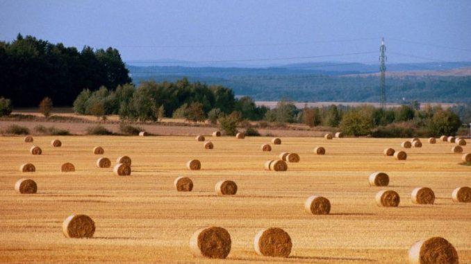 Extremsommer reißt Löcher in die Bilanzen der Bauern -