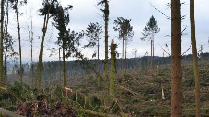 Das Holz wird noch länger im Wald bleiben - Foto: Petra Sorgenfrei