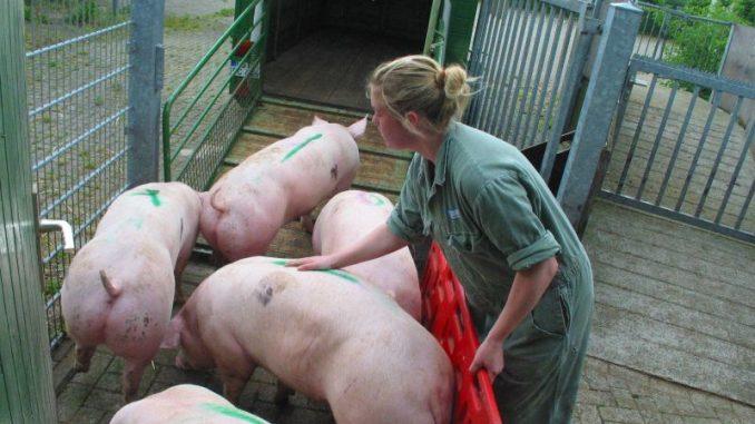 Neues Konzept: Beruf Landwirt ist attraktiv! - Foto: Landwirtschaftskammer