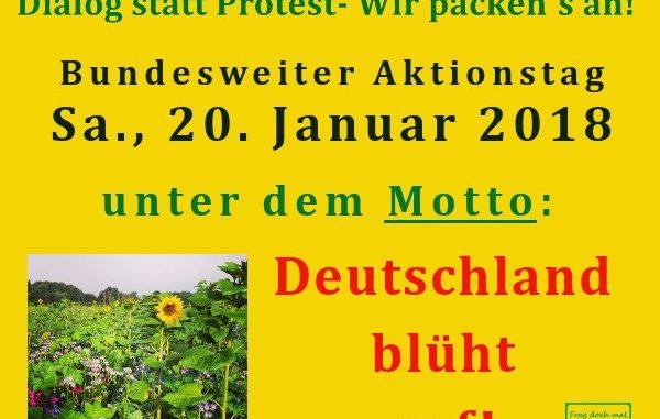 Deutschland blüt schon im Januar auf -