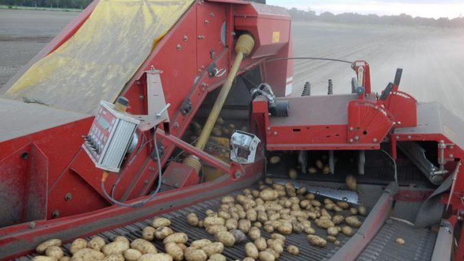 Bockerode wird wieder zum Kartoffeltreffpunkt - Foto: landpixel