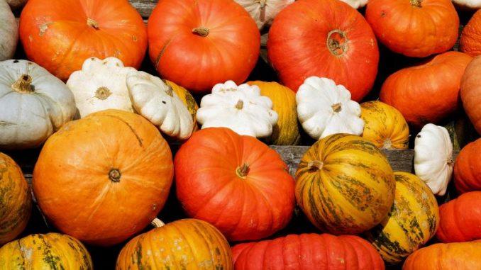 Leuchtende Kürbisse kündigen den Herbst an - Foto: pixabay