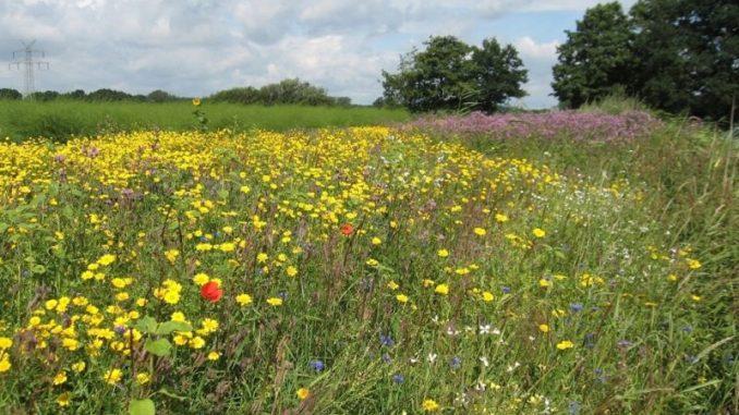 Biodiversität und Artenschutz in der Landwirtschaft - Foto: Hoppe