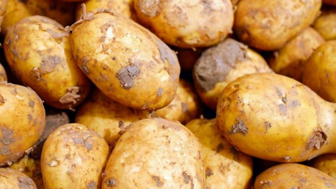 Kartoffelbauern fehlt ein Viertel der Ernte - Foto: pixabay