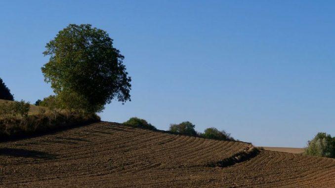 Schutz von Bodenmärkten erfordert Leitbild - Foto: pixabay
