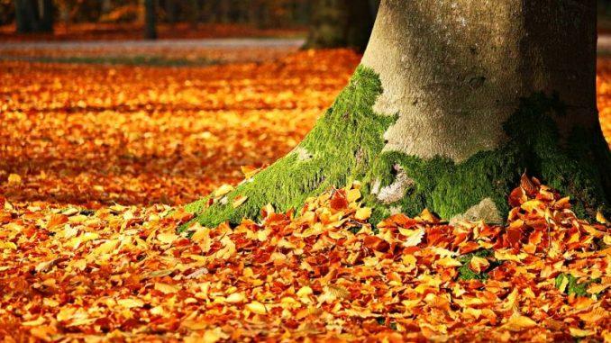 Dürrehilfen für die Forstwirtschaft - Foto: pixabay