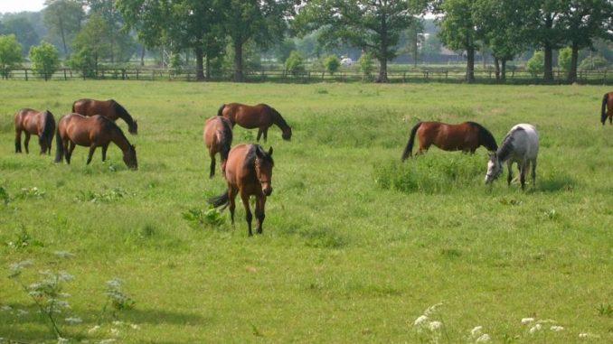 Tierhalter beginnen das Jahr mit der Bestandsmeldung - Foto: Landvolk