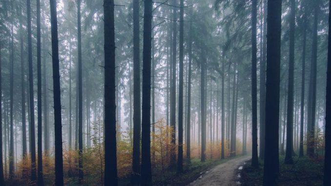 Bürgerdialog zum Leitungsbau im Wald - Foto: pixabay
