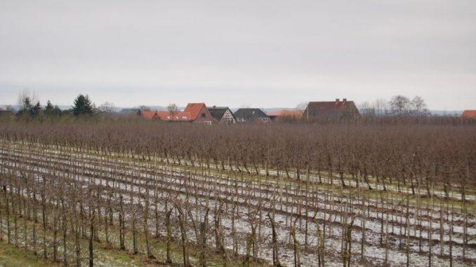 Obstbauern gehen mit Obstbautagen in die Saison - Foto: Landvolk