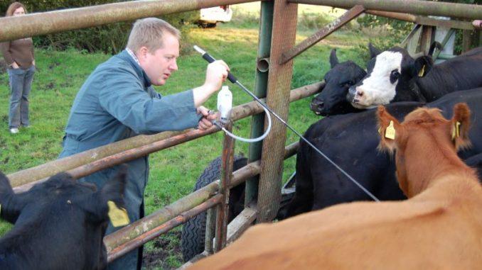 Tierhalter in Sorge vor Tierseuchen - Foto: Landvolk