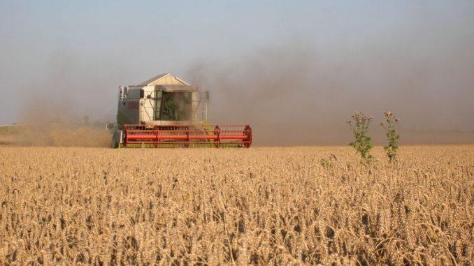 Erntevorräte neigen sich dem Ende - Foto: Landvolk