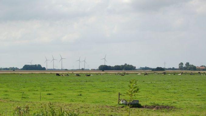 Auf Wiesen und Weiden wächst es schon - Foto: Landvolk