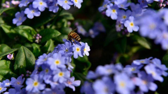 Garten und Balkon bienenfreundlich gestalten - Foto: Grünes Medienhaus