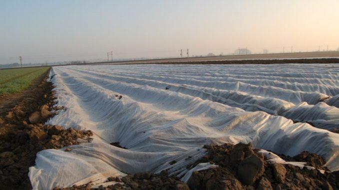 Erste Frühkartoffeln sind schon in der Erde - Foto: Landvolk