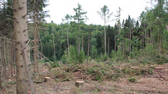 Der Wald wird zum Dauerpatienten - Foto: Landvolk