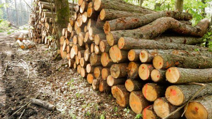 Waldbesitzer treiben große Sorgen um - Foto: landpixel