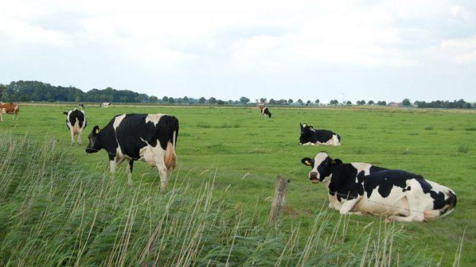 Niedersachsen ist Weideland - Foto: Landvolk Niedersachsen