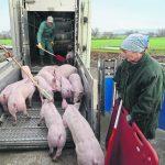 Ein Augenmerk auf kranke Tiere legen - Foto: Landpixel