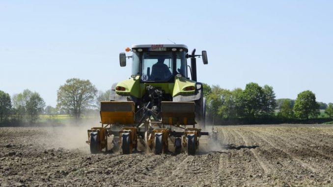 Jetzt kommt der Mais in die Erde - Foto: Landpixel