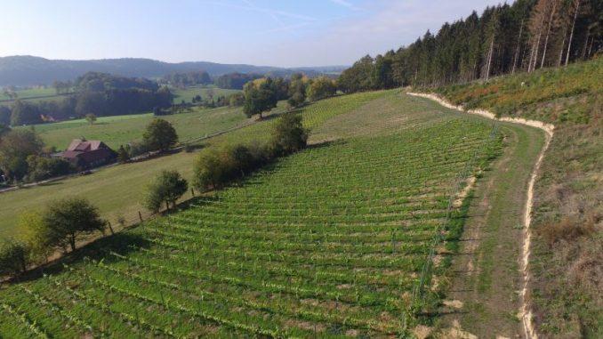 Niedersachsens Pioniere im Weinanbau - Foto: Landvolk