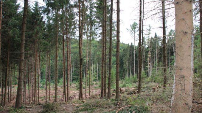Stürme und Käfer produzieren Holz im Überfluss - Foto: Landvolk