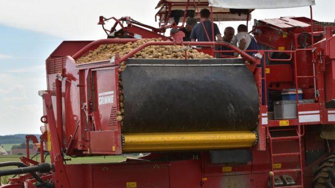 Die ersten niedersächsischen Frühkartoffeln sind da - Foto: Landpixel