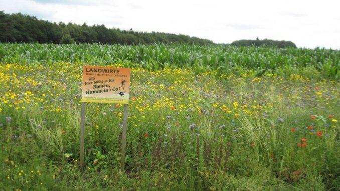 Blühstreifen schöpfen jetzt aus dem Vollen - Landvolk