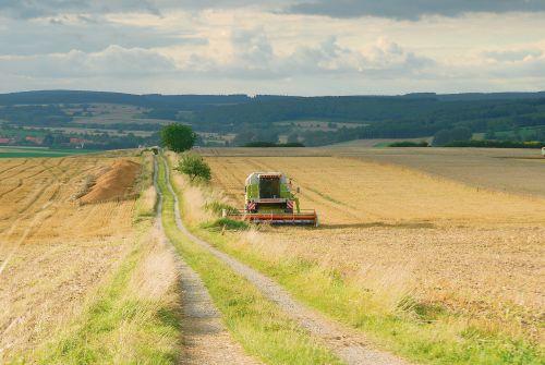 Greening: Versuch einer Erklärung - Foto: landpixel