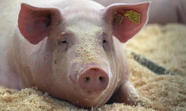 Bund mit eigener Tierwohl-Initiative - Foto: imago