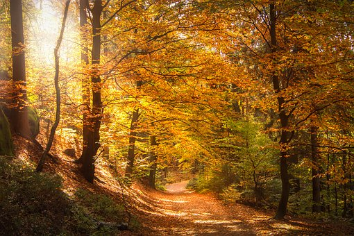 Kleinprivatwaldbesitzer tagen in Werningerode -