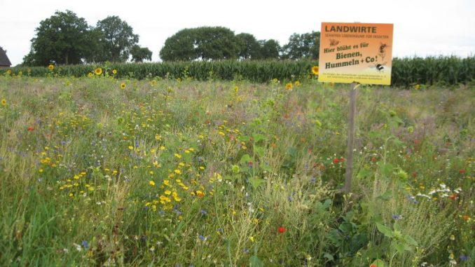 """Bunte Blüten zum """"Tag der Niedersachsen"""" - Foto: Landvolk"""