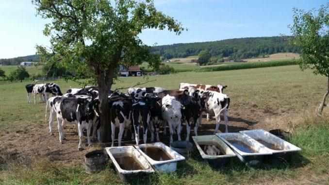 Sonnenschutz für Mensch und Tier - Landvolk