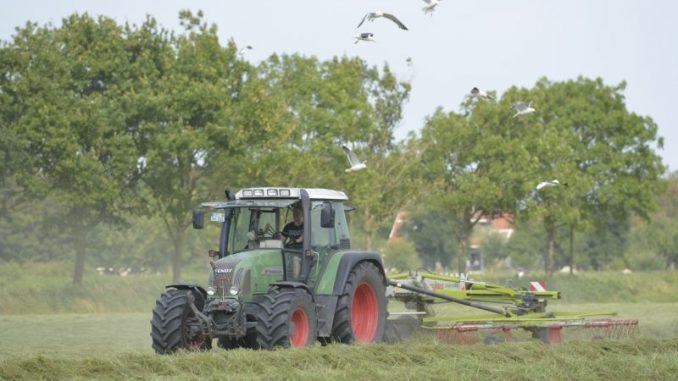 Hitzewelle dämpft die Milchanlieferung - Foto: Landvolk