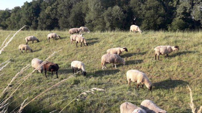 Bundesprogramm Wolf mit zu engen Vorgaben - Foto: Landvolk