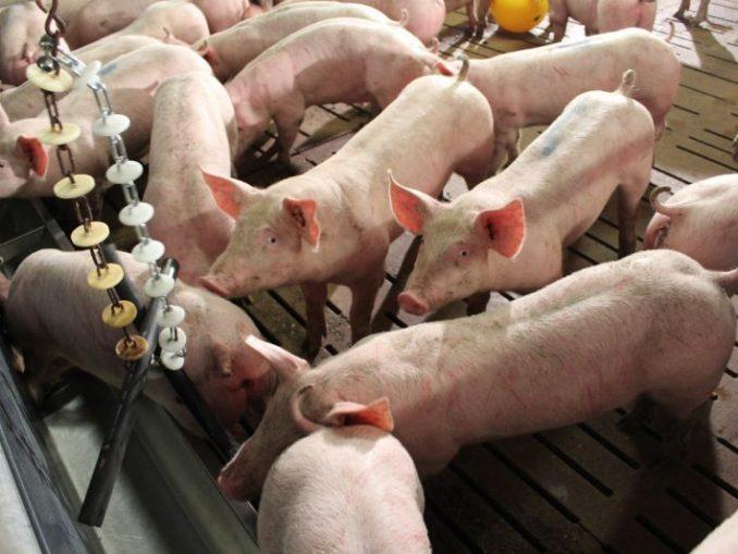 Deutschlands Tierställe werden leerer - Foto: Landvolk