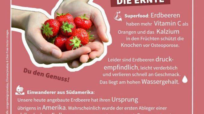 Beeren gelten als Superfood -
