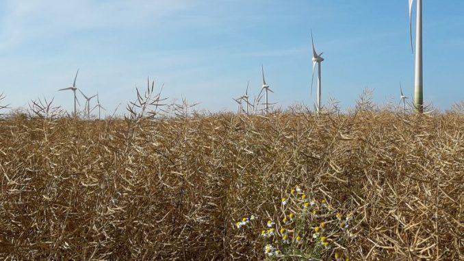 Für neue Saaten ist es zu trocken - Foto: Landvolk