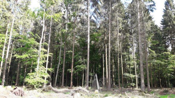 Wald ist Retter und Sorgenkind zugleich -