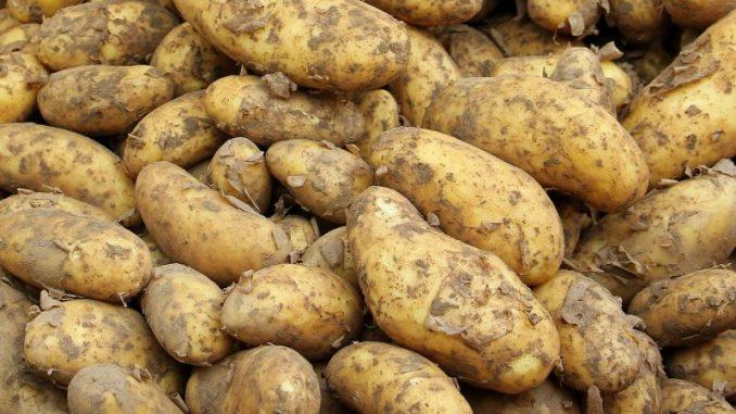 Spannende aber erfolgreiche Frühkartoffelsaison - Foto: pixabay